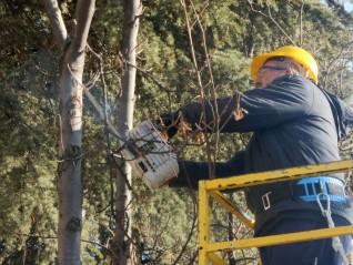 Ağaçlar bahara budanarak hazırlanıyor